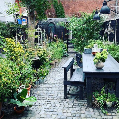 Schattig tiny house midden in Den Haag