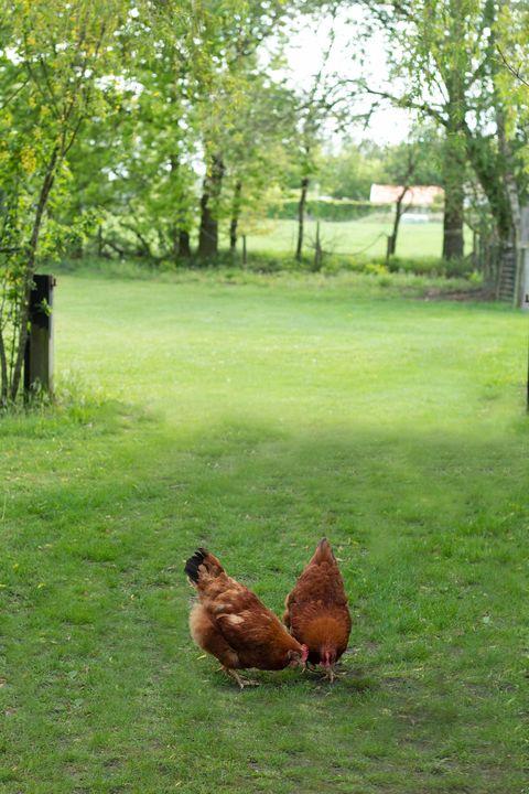 Vorstelijk genieten in een boerderij suite
